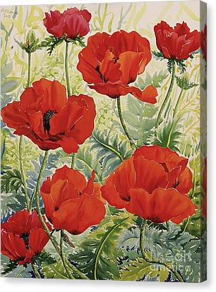 Horticultural Canvas Print - Large Red Poppies by Christopher Ryland