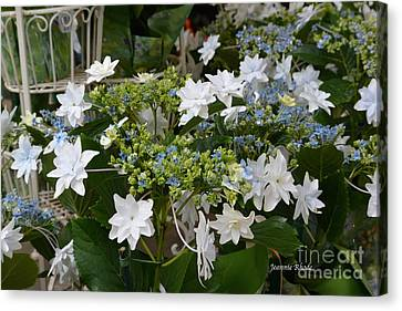 Canvas Print featuring the photograph Shooting Star Bouquet by Jeannie Rhode