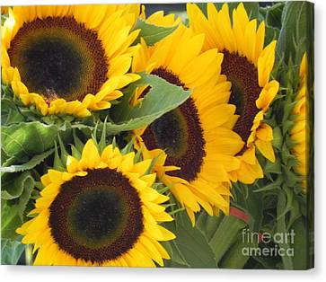 Canvas Print featuring the photograph Large Sunflowers by Chrisann Ellis