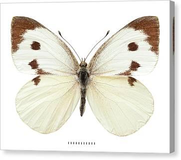 Large White Canvas Print