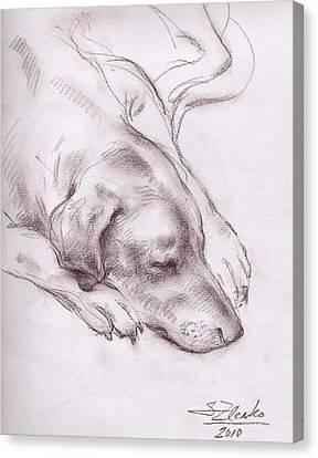 Lars Sleeping Canvas Print