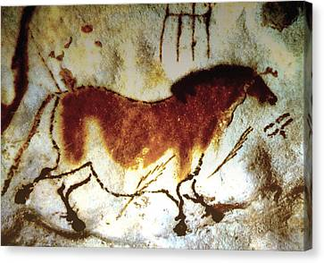Lascaux Horse - Version 2 Canvas Print by Asok Mukhopadhyay