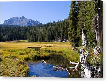 Lassen Mountain Stream Canvas Print