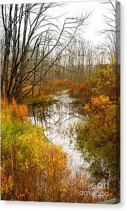 Last Burst Of Color Canvas Print by A New Focus Photography