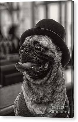 Last Call Pug Greeting Card Canvas Print