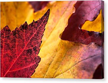 Last Days Of Fall Canvas Print by Crystal Hoeveler