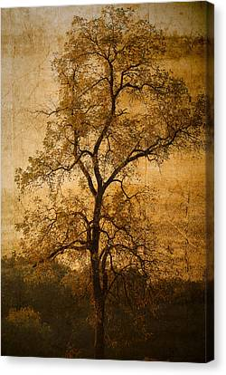 Last Fall Canvas Print by Lena Wilhite