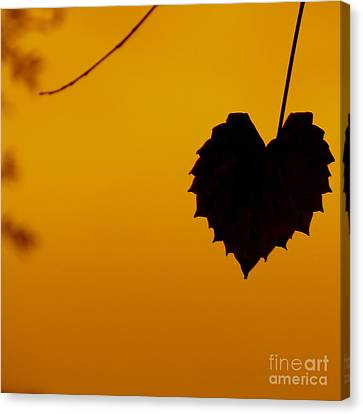 Canvas Print featuring the photograph Last Leaf Silhouette by Joy Hardee