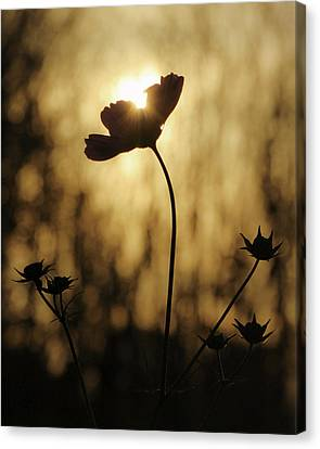 Canvas Print featuring the photograph Last Light by David Hufstader