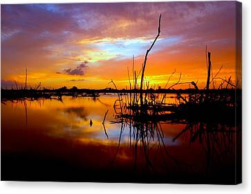 Last Light Canvas Print by Tracy Welker
