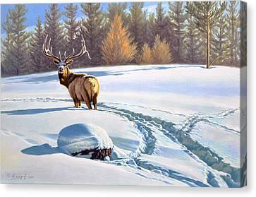 Last Look  -elk Canvas Print by Paul Krapf