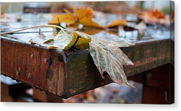 Last Of The Leaves Canvas Print by Gwyn Newcombe
