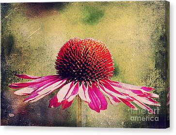 Abstracted Coneflowers Canvas Print - Last Summer Feeling by Angela Doelling AD DESIGN Photo and PhotoArt