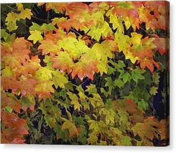 Canvas Print - Last Year's Autumn Leaves by Philip White
