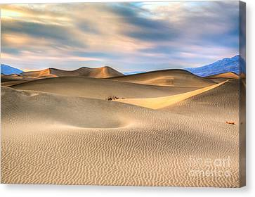 Late Afternoon At The Mesquite Dunes Canvas Print
