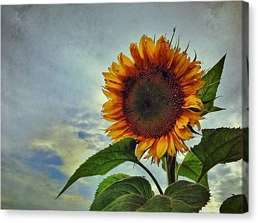 Canvas Print - Late August Sun by Jame Hayes