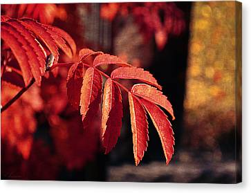 Late Autumn Colors Canvas Print by Maria Angelica Maira