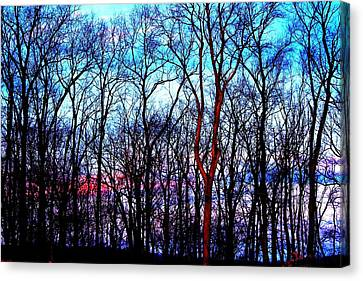 Late Cold Afternoon Canvas Print by Jose Lopez