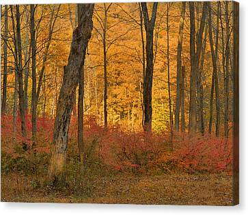 Late Day Autumn Light Canvas Print by Stephen  Vecchiotti
