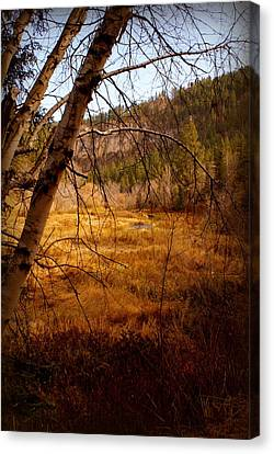 Late Fall Canvas Print