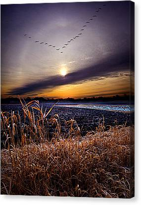 Late For Dinner Canvas Print by Phil Koch
