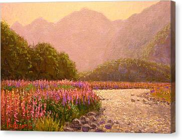 Late Light Egglinton Valley Canvas Print