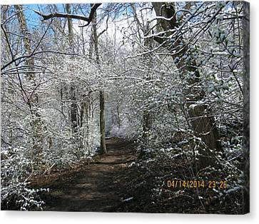Canvas Print featuring the photograph Late Season Snow Fall by Eric Switzer