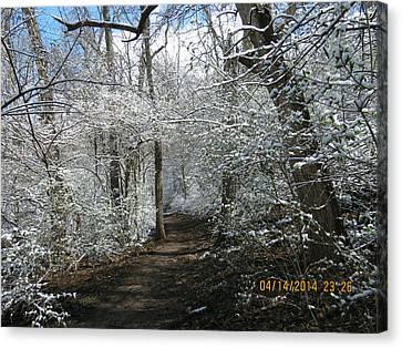 Late Season Snow Fall Canvas Print