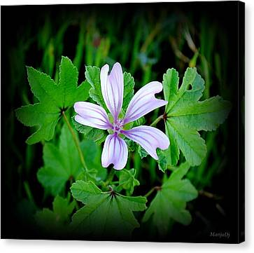 Canvas Print featuring the photograph Late Summer Beauty by Marija Djedovic