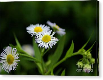 Late Summer Bloom Canvas Print