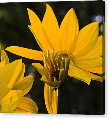 Canvas Print featuring the photograph Late Summer Blooms by Michael Friedman