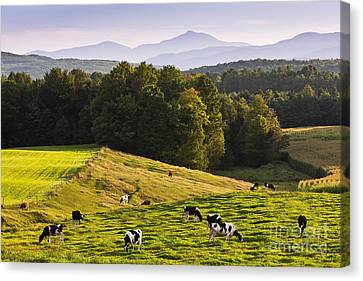Late Summer Countryside Canvas Print