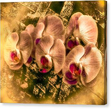 Late Summer Orchids Canvas Print by Jill Balsam