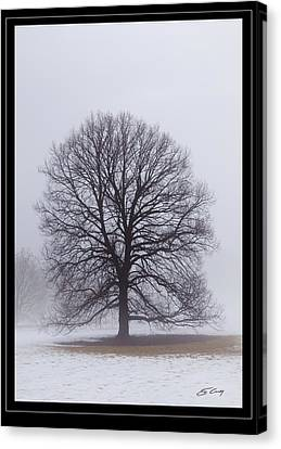 Late Winter Fog   Framed Canvas Print