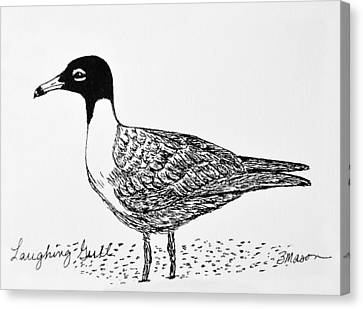 Laughing Gull Canvas Print by Becky Mason