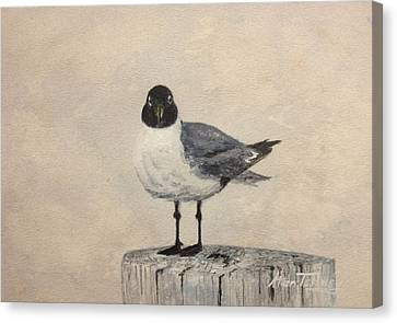 Canvas Print featuring the painting Laughing Gull by Stan Tenney