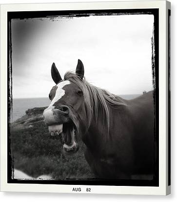 Laughing Horse Canvas Print by Tracy Munson