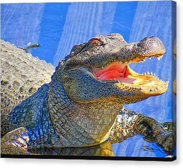 Laughing In The Morning Sun Canvas Print by Dennis Dugan