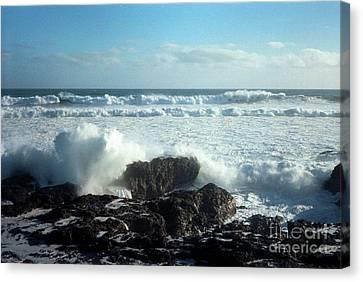 Lava Beach Rocks On 90 Mile Beach Canvas Print by Mark Dodd