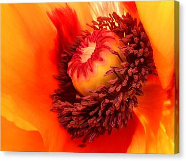 Lava Flow Canvas Print by Connie Handscomb