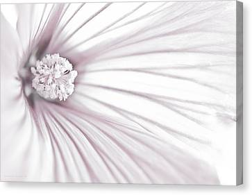 Country Magazine Decor Canvas Print - Lavatera Flower Stamen Macro  by Sandra Foster