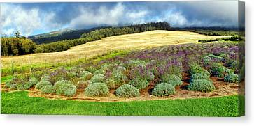 Lavendar 5 Canvas Print by Dawn Eshelman
