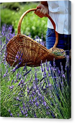 Lavender And Basket Canvas Print
