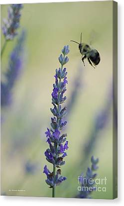 Canvas Print - Lavender And The Bee by Tannis  Baldwin