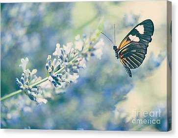 Lavender And The Butterfly Canvas Print by Juli Scalzi