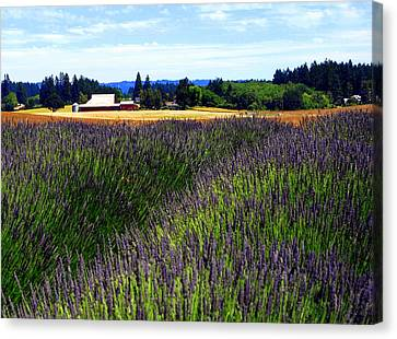 Lavender Barn Canvas Print by Mamie Gunning