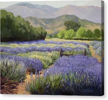 Lavender Blue Canvas Print by Jane Thorpe