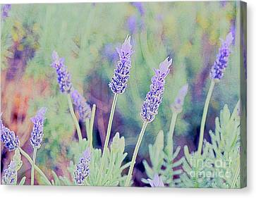 Lavender Canvas Print by Cassandra Buckley