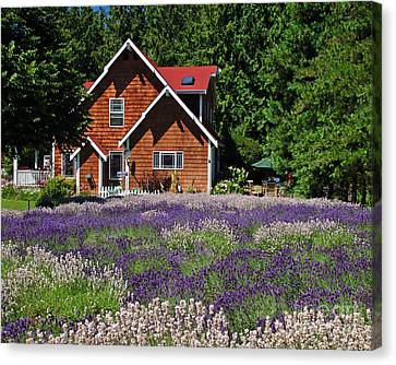Lavender Cottage Canvas Print by Chuck Flewelling