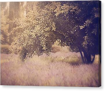 Lavender Dreams Canvas Print by Amy Weiss